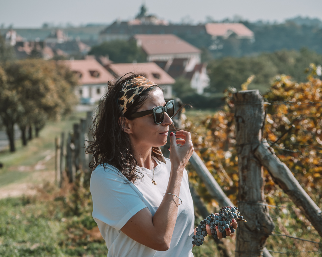 Czech Moravia-Czech wine