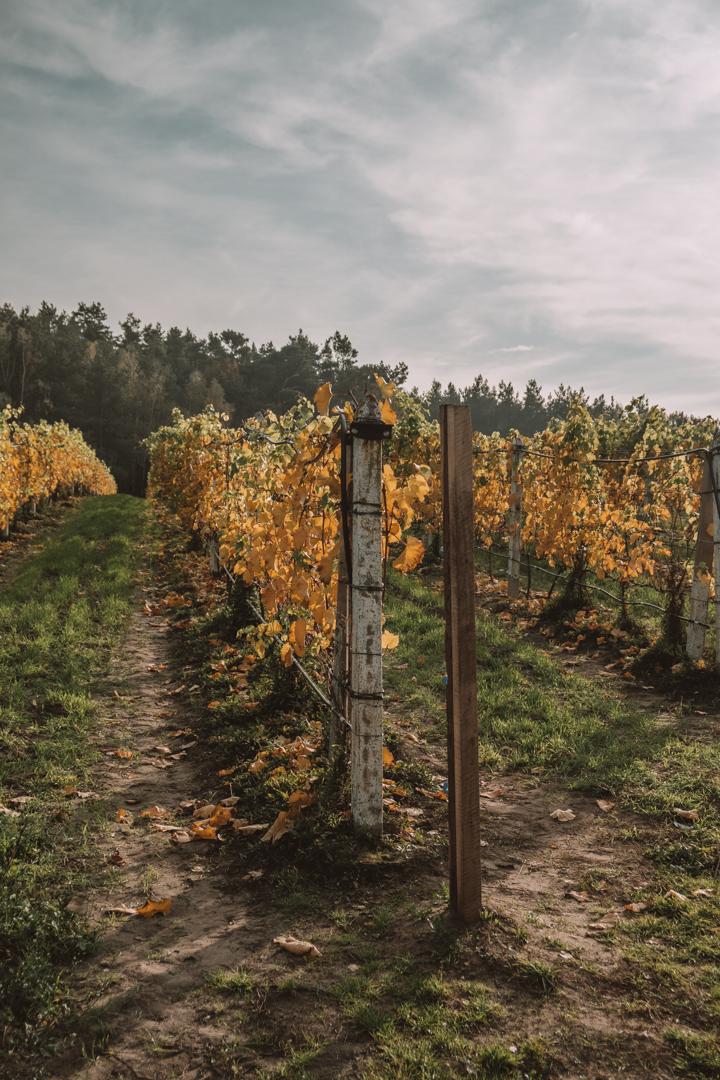 Winnica Dwórzno - polskie wina