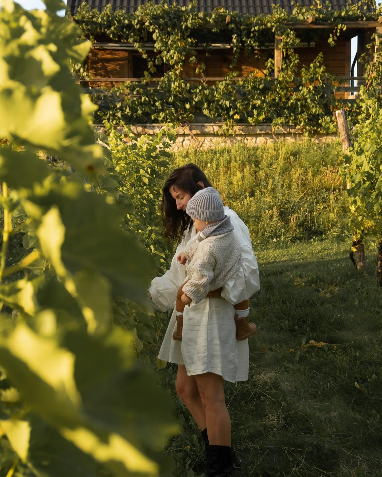 domek w winnicy-winnica nad zrodlem
